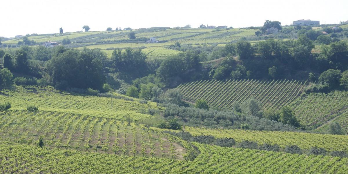 header Eò | Slow Wine