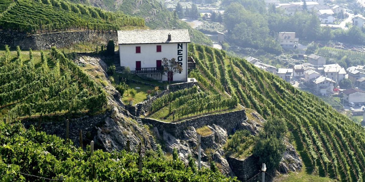 header Nino Negri   Slow Wine