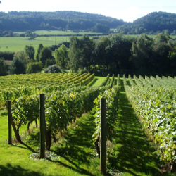 Castello Monaci   Slow Wine
